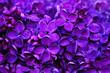 Leinwandbild Motiv Lilac flowers, spring floral background