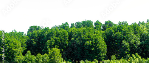 Leinwand Poster  Green bush leaves tree forest isolated on white background