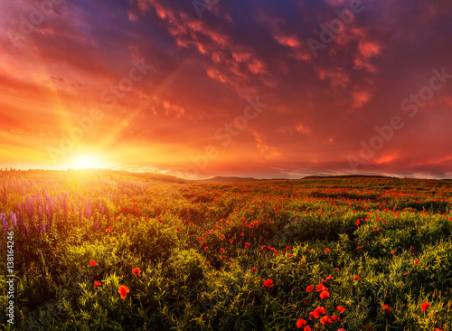 Montage in der Fensternische Ziegel Fantastic evening with flowering hills in the warm sunlight in the twilight. dramatic sky. beautiful morning scene. wonderful blooming field of poppies. soft selective focus. nature background