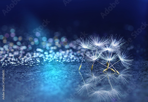 Beautiful abstract blue background on a mirror surface of the seeds of dandelion flowers with reflection close-up macro with sparkling water drops rain dew. Colorful air artistic image.
