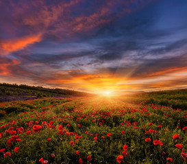 Obraz na Szkle Vintage majestic landscape, colorful sky over the poppy field, af wonderful sunset. soft selective focus. creative image.