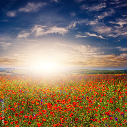 Fototapety, obrazy: Poppy and flowers on the field. landscape. fantastic view of the sky over a colorful field of flowers.