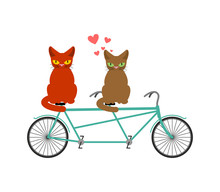 Cat Lovers On Tandem. Lover  Of Cycling. Joint Walk On Street. Pet Romantic Date. Cats Lifestyle