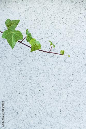Fotografía  Fondo conceptual con una rama con hojas verdes sobre un fondo de piedra