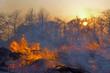 Feuer vor Baumsilhouetten bei Sonnenuntergang