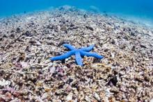 A Single Blue Starfish On A De...