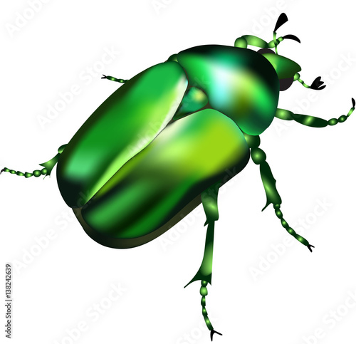 Valokuvatapetti Emerald chafer - vector illustration