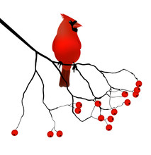 Red Cardinal - Vector Illustration