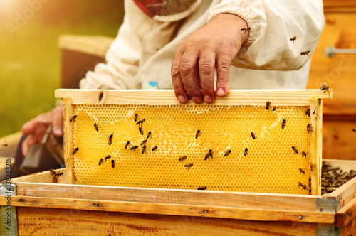 Photo Beekeeper inspects honey comb with bees. Apiculture.