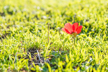 Natural Flower Background. Amazing Nature View Of Red Flower Blooming In Garden Under Sunlight At The Middle Of Summer Day.