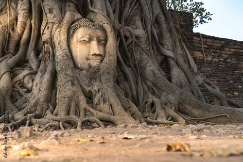 Fotografia  Ancient Buddhism head in root at, Ayutthaya, Thailand