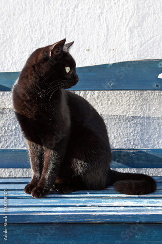 In de dag Panter Katze auf Bank