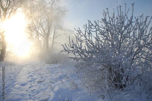 Fototapeten Natur winter, winter-tide, winter-time
