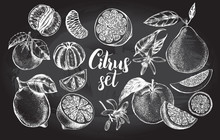 Nk Hand Drawn Set Of Different Kinds Of Citrus Fruits. Food Elements Collection For Design, Vector Illustration.