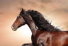 Beautiful Andalusian Stallion Portrait With Flowing Mane On A Wind