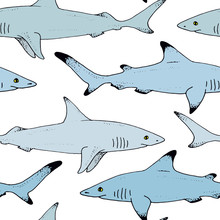 Seamless Pattern With Vector Shark Hand Drawn Illustration With Wild Sea Animal. Sea Life Sketch With Predator Dangerous Fish