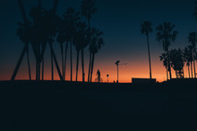 Silhouette Of Cyclist By Palm Trees At Sunset