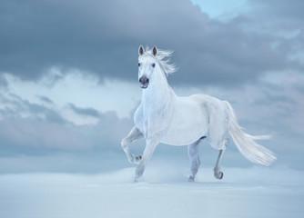 White horse runs on snow on sky background