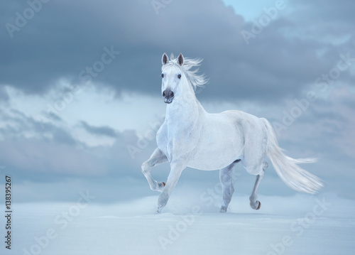 Obraz Biały koń biegnie na śniegu na tle nieba - fototapety do salonu