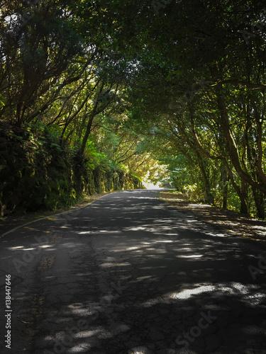 Deurstickers Canarische Eilanden Green Anaga Mountains. Light and Shadow. Hiking on Tenerife.