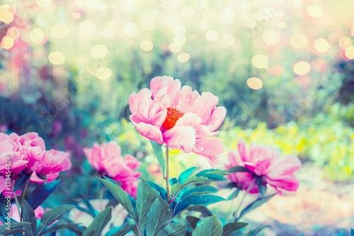 piekny-ogrod-kwiatowy-z-rozowym