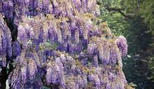 Blooming Garden Of The Royal Palace Of Laeken