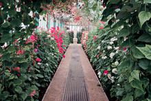 Greenhouse Of The Royal Palace Of Laeken, Brussels. Glasshouse With Exotic Flowers. Popular Landmark In The Capital Of Begium. Blooming Season In Europe.