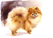 Watercolor Dog Pomeranian Port...