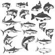 Fish illustrations on white background. Carp, bass fish, trout, salmon, sword fish icons. Design elements for logo, label, emblem. Vector illustration.