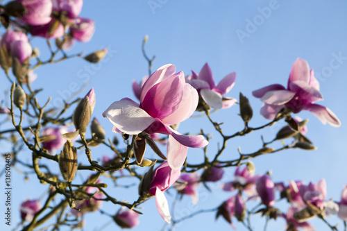 Photo Spring in London