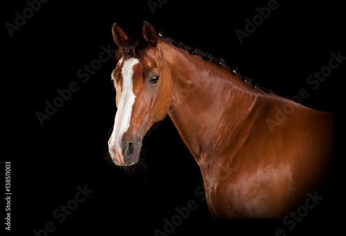 brazowa-glowa-konia-z-lysina-na-czarnym-tle