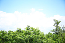 Tree Branches With Green Leaves On Sky Background