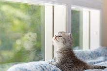 Kitten In Cat Cafe