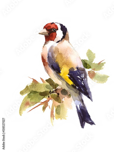 Fotografia, Obraz Watercolor Bird European Goldfinch Sitting on the Branch Hand Painted Illustrati