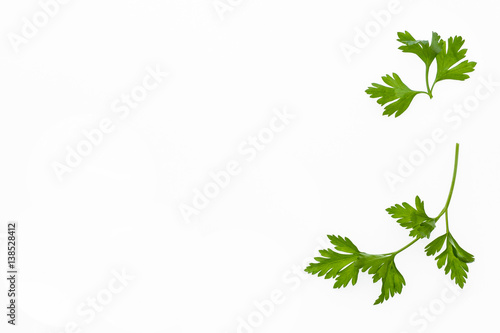 garden parsley leaves with copy space on white background