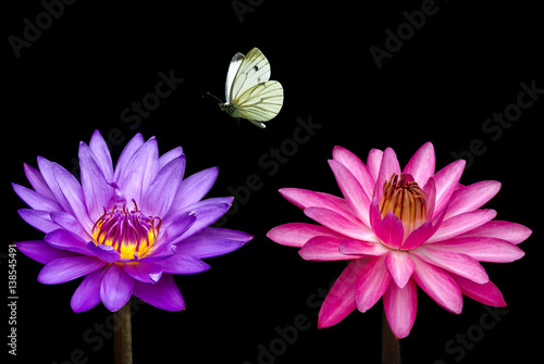 Garden Poster Lotus flower Butterfly and water lily close-up