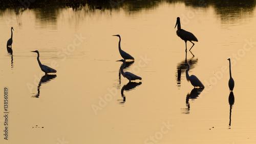 Fotografija  Birds reflected on water. Brazilian wildlife