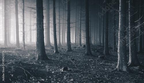 Fotobehang Bossen Wald mit Nebel ind Licht