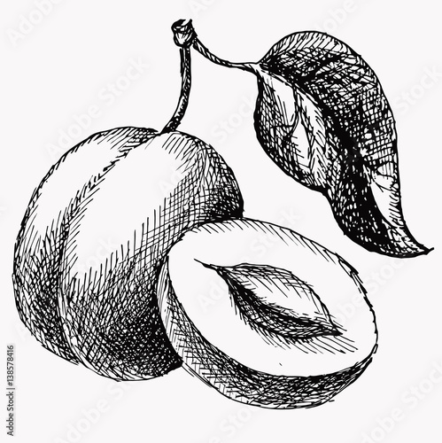 The plum and half of plun and leaf. Fruit vintage vector drawing isolated