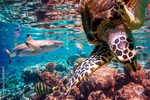 Staande foto Koraalriffen Tropical Coral Reef.