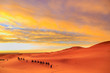 Caravan of camels with tourist in the desert at sunset against a beautiful sky