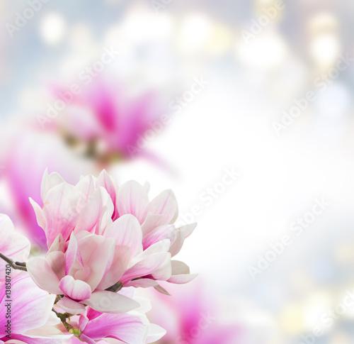 wiazka-magnolia-rozowi-kwiaty-nad-szarym-tlem-z-kopii-przestrzenia