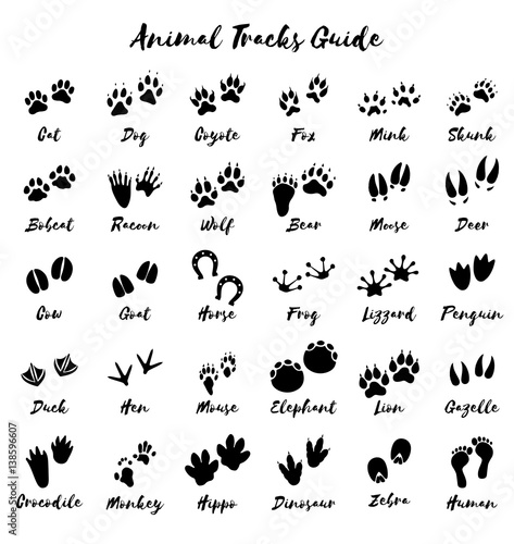 Animal tracks - foot print guide vector