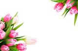 Fototapeta Tulipany - Pink tulip flowers corners
