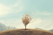 Surreal Autumn Foliage