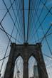 New York Shots