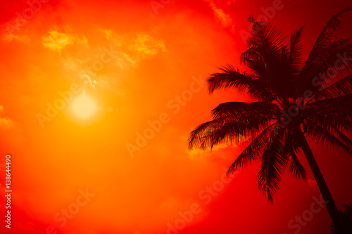 Poster Corail summer season at the beach, silhouette palm tree with clear sunny sky with extreme hot sunshine day background.