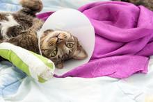 Broken Leg Splint Cat