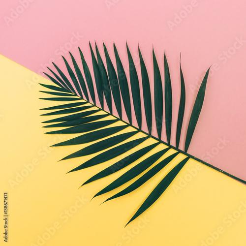 palm leaf on pink and yellow background. fashion minimalism