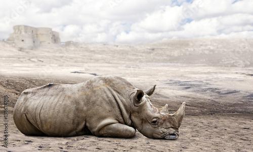 Poster Rhino rhino in the desert